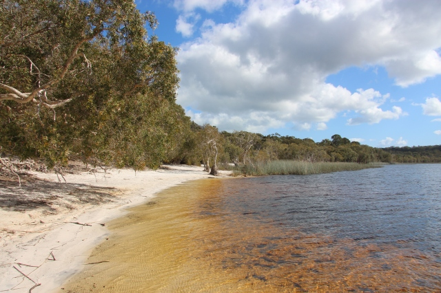 Brown_Lake_(North_Stradbroke_Island).jpg